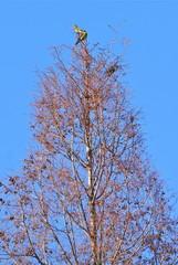 落葉樹にアオバト
