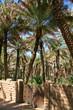 ������, ������: Al Ain Oasis