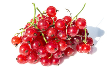 Red Currants on White Background with a Shadow and Water Drops