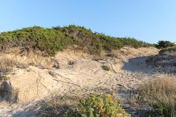dune coast line