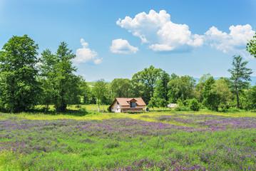 Farm field with Purple flowers