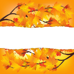 Autumn tree branches