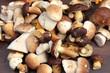 Pilze sammeln - 69489106