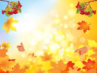 Autumn viburnum