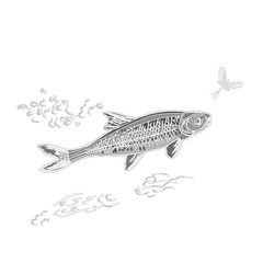 Fish and ephemera as vintage engraved vector illustration