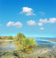 molentargius pond