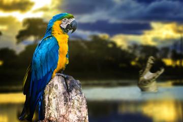 Macaw and a crocodile in Pantanal, Brazil