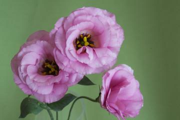 Три цветка крупным планом