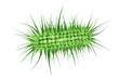 Ecoli bacterium - 3D Render - 69498343
