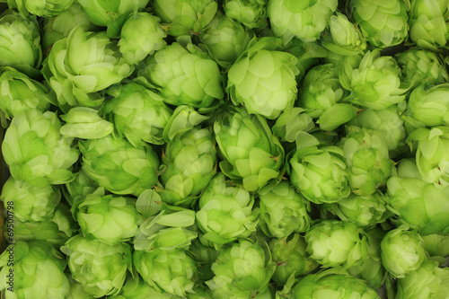 In de dag Planten hop cones green abstract background