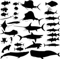 sea life vector illustration set