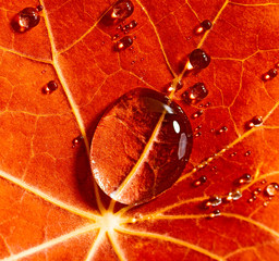 drops on a autumnal leaf