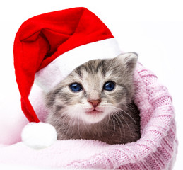 cute newborn kitten with santa cap