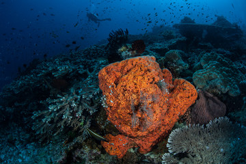 Diver, Reef and Sponge