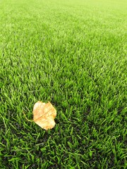 The end of football season, dry leaf on artificial green turf