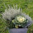 zinneimer mit zierkohl und erika bepflanzung