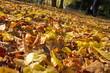 canvas print picture - Herbstlaub auf der Promenade in Münster