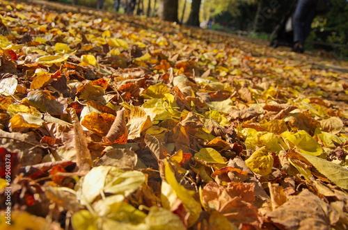 canvas print picture Herbstlaub auf der Promenade in Münster