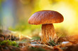 Leinwanddruck Bild - Cep mushroom growing in autumn forest. Boletus