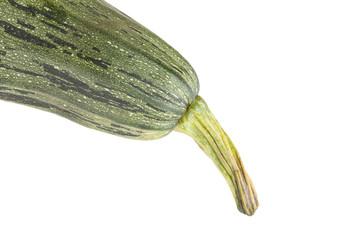 the tip of the vegetable marrow with a tail isolated on white ba