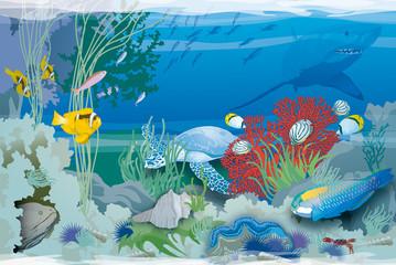 Atoll - Espèces des coraux
