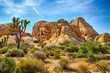 Joshua Tree National Park - 69510585