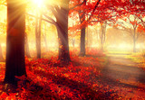 Fototapety Fall scene. Beautiful autumnal park in sunlight