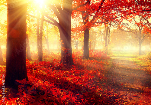 Foto Spatwand Bomen Fall scene. Beautiful autumnal park in sunlight