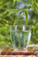 glass of water in bamboo environment