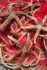 Fishing nets & sea stars