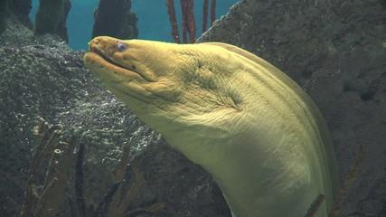 Eels, Serpents, Sealife, Underwater