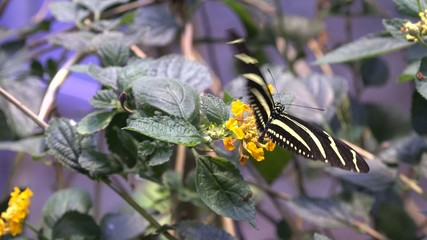 Butterfly, Butterflies, Insects, Flowers
