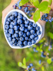 Blueberries - summer fruits