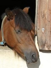 chevaux à l'écurie