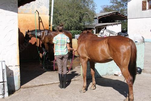 Keuken foto achterwand Paardrijden chevaux à la douche