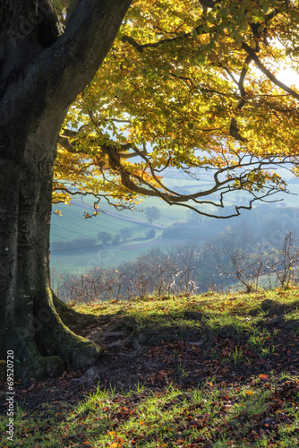 Poster Heuvel Stunning Autumn morning view over countryside landscape