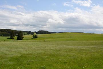 Wiese im Ostallgäu
