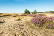 Colorful dune landscape
