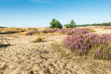 Colorful dune landscape