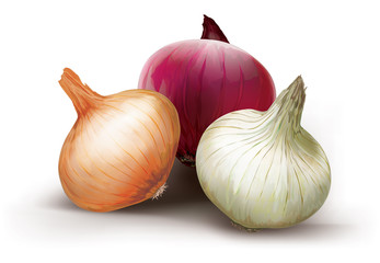 Onions of different colors