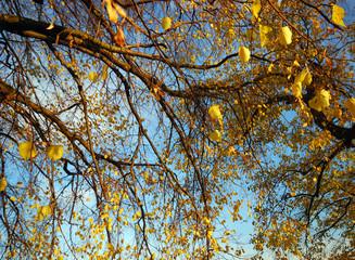 Herbstbaum: letzte goldene Blätter :)