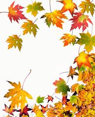 Goldener Herbst: Fallende, bunte Blätter :)