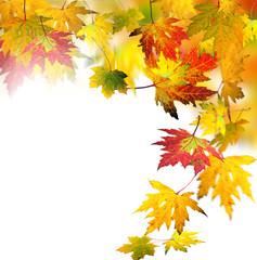Herbststimmung: Fallende, bunte Blätter :)