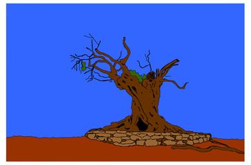 ulivo secolare su sfondo blu