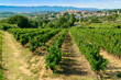 Leinwanddruck Bild - Languedoc vineyards around Beziers Herault France