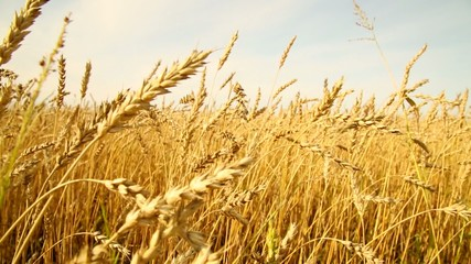 Huge Wheatfield, slider
