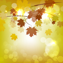 Autumn vector background with leaves and light