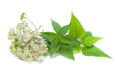 yarrow and nettle on white background