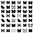 Greate collection of butterflies - 69529544