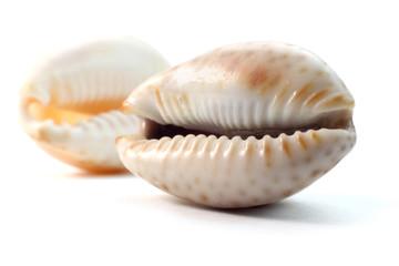 Close up shot of two sea shells